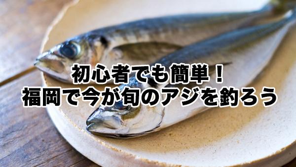 初心者でも簡単!福岡で今が旬のアジを釣ろう