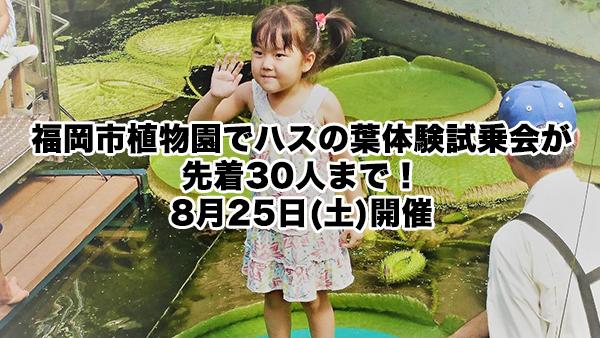 【終了】【今年度最後】福岡市植物園でハスの葉体験試乗会が先着30人まで!8月25日(土)開催