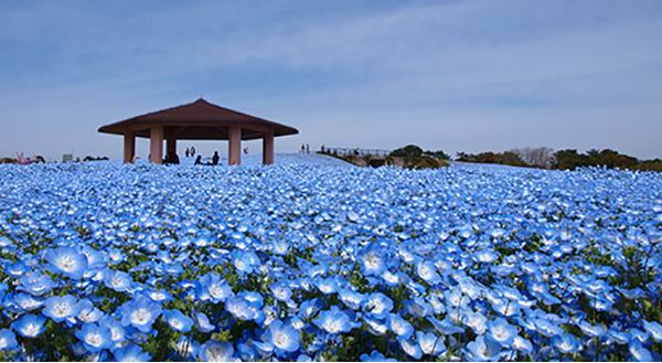 春の花々が1,000種300万本!海の中道フラワーピクニックで福岡の春を満喫しよう
