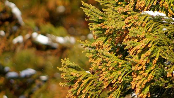 花粉症、アレルギーの方必見!福岡市のHPで花粉とPM2.5、黄砂の飛散状況が確認できるサービス開始